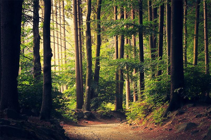 trail idf