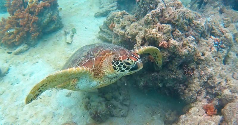Plongee Snorkeling en Nouvelle-Caledonie