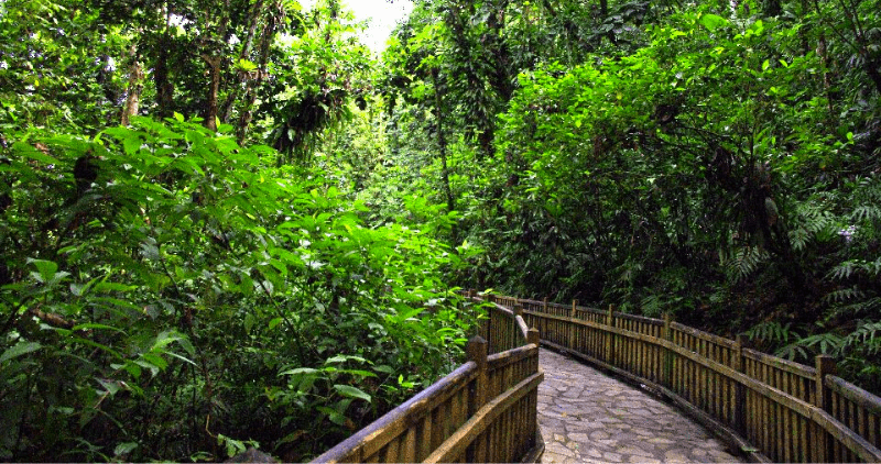 foret guadeloupe