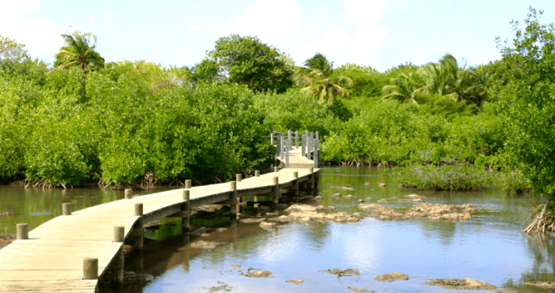 foret tropicale guadeloupe